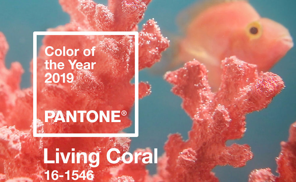 Pantone Colour for 2019 – 'Living Coral', will have you reaching for the paintbrush!